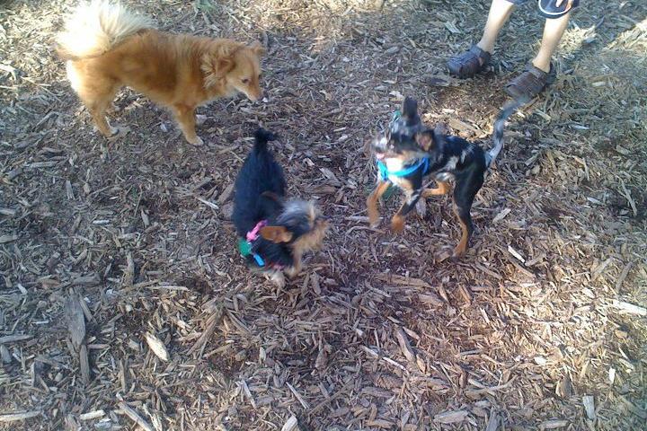 Pet Friendly Mill Woods Park Dog Park