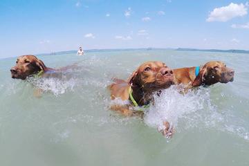 Pet Friendly Balatonföldvár Dog Beach