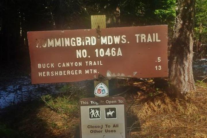 Pet Friendly Muir Creek Trail to Hummingbird Meadows