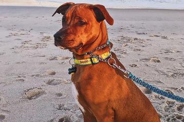 Pet Friendly Kure Beach