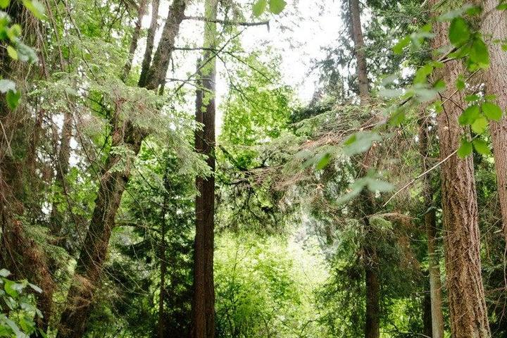Pet Friendly Tranquil Old Growth Forest Walk