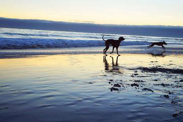 Pet Friendly Mitchell's Cove Beach