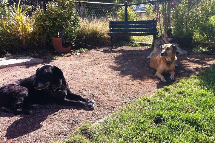 Pet Friendly Brisbane Dog Park