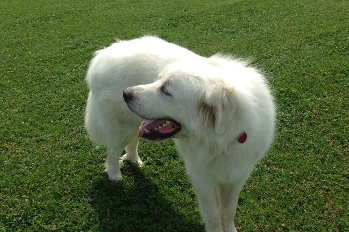 Pet Friendly Meadowbark Dog Park