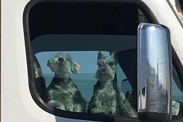 Pet Friendly TA Coachella