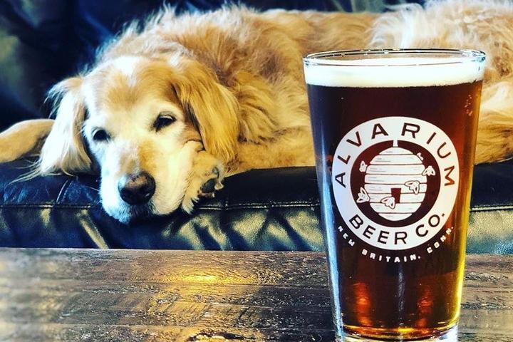 Pet Friendly Alvarium Beer Co.