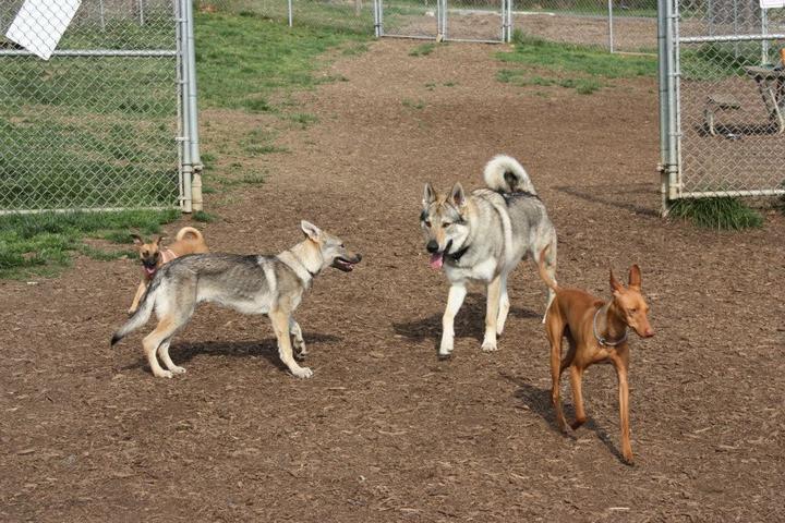 Pet Friendly The Ma & Pa Dog Park