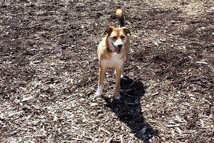 Pet Friendly Sprout Brook Dog Park