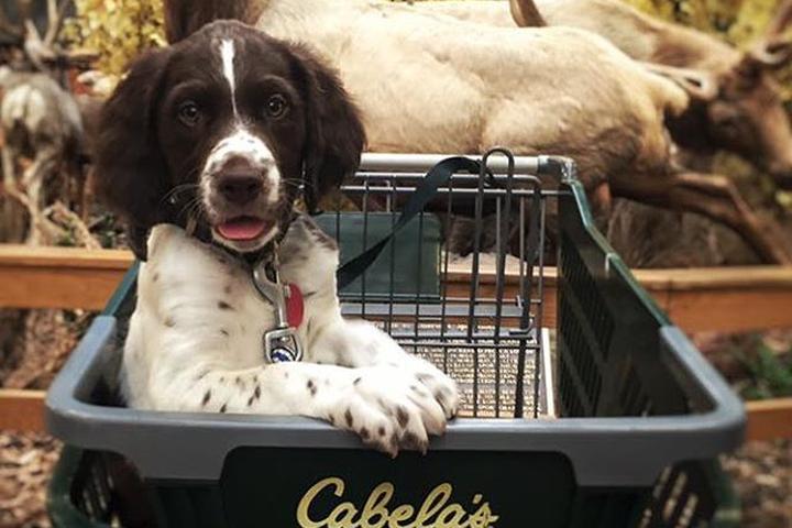 Pet Friendly Cabela's