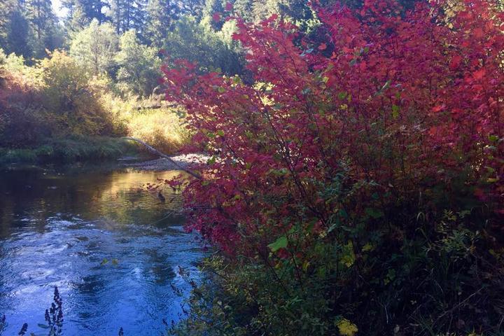 Pet Friendly Upper Rogue River Trail: Natural Bridge to Big Bend Segment