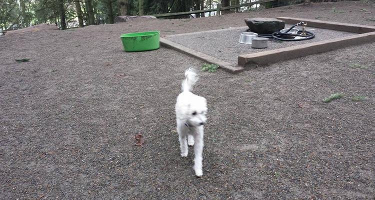 Woodland Dog Park