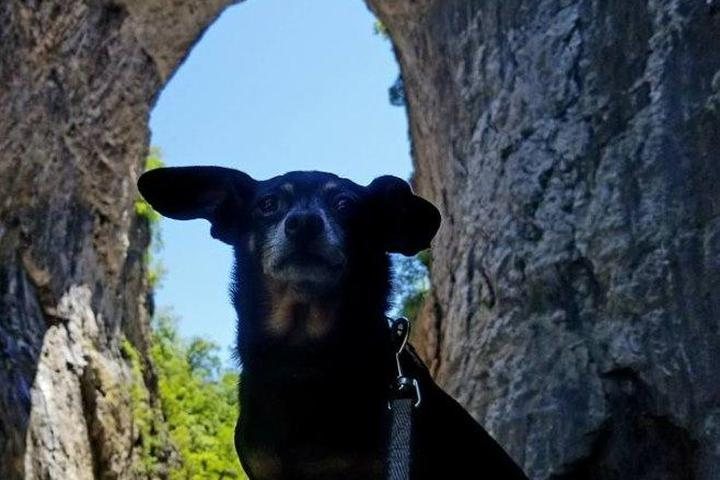 Pet Friendly Natural Bridge