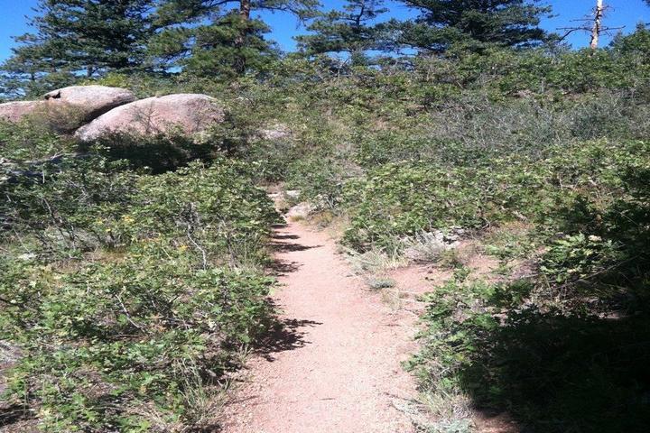 Pet Friendly Waldo Canyon Loop Trail