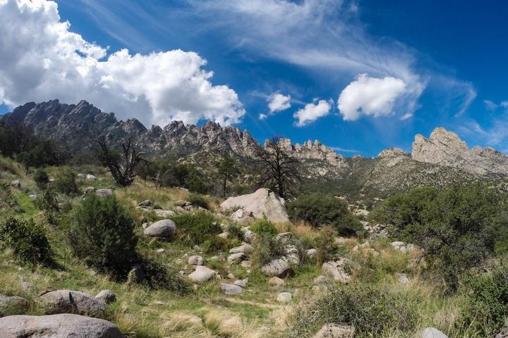 Pet Friendly Pine Tree Loop Trail