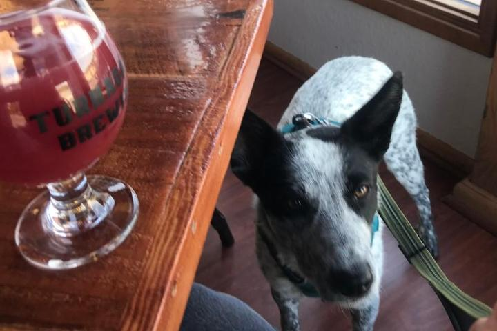 Pet Friendly Turnagain Brewing
