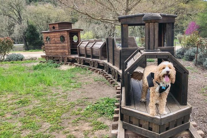 Pet Friendly Jack Creek Farms
