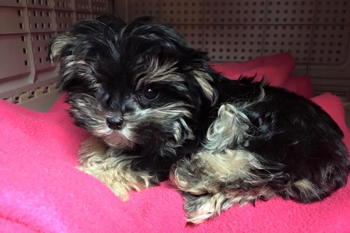 Pet Friendly ShamPoochies Pet Salon & Bakery