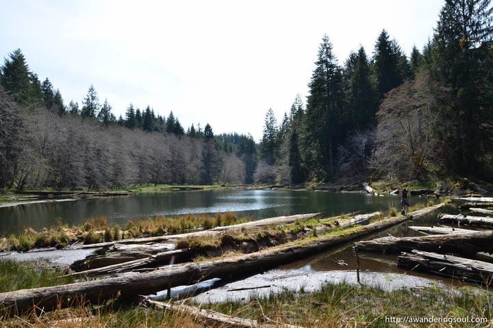 Pet Friendly Soapstone Lake Trail