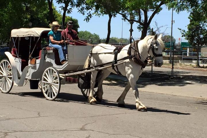 Pet Friendly Top Hand Ranch Carriage Company