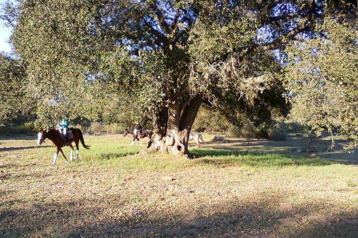 Pet Friendly Nipomo Park Off Leash Area