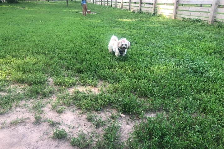 Pet Friendly Leawoof Dog Park