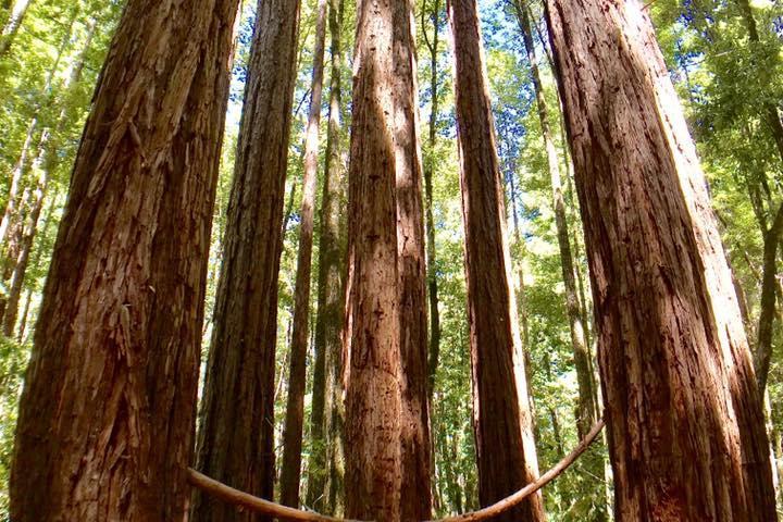 Pet Friendly Portola Redwoods State Park