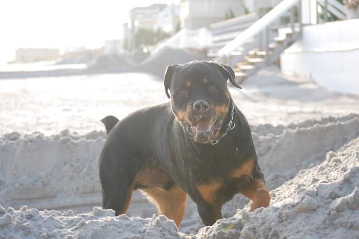 Pet Friendly Margate City Dog Park