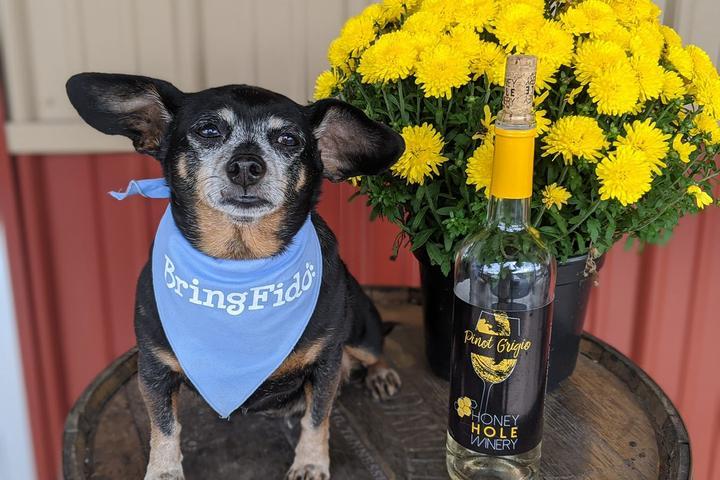 Pet Friendly Honey Hole Winery