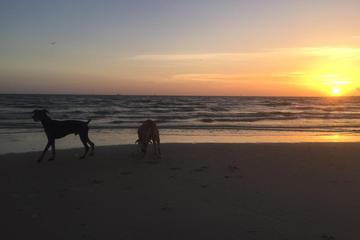 Pet Friendly Fort Morgan Beach