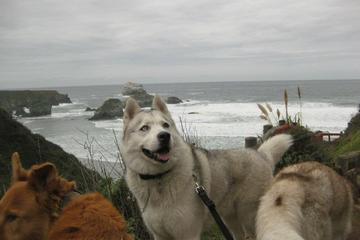 Pet Friendly Sand Dollar Beach