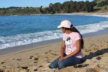 Pet Friendly Carmel River State Beach
