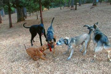 Pet Friendly Dogs Run Free of Nevada County