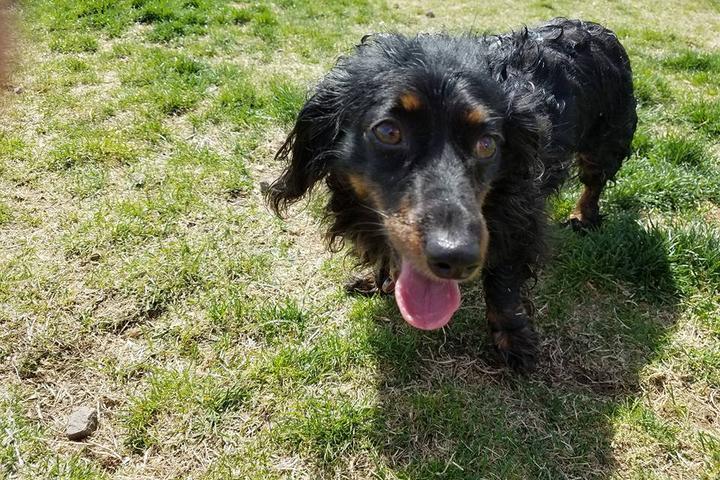 Pet Friendly Paws-abilities Place Dog Park at Badger Mountain Community Park