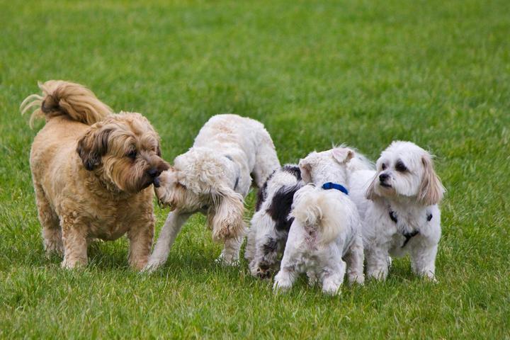 Pet Friendly Bowmanville Off-Leash Dog Park