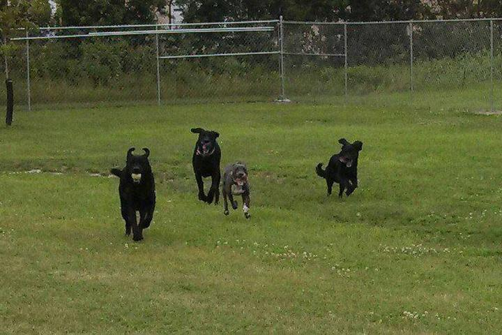 Pet Friendly Waggin' Tails Dog Park