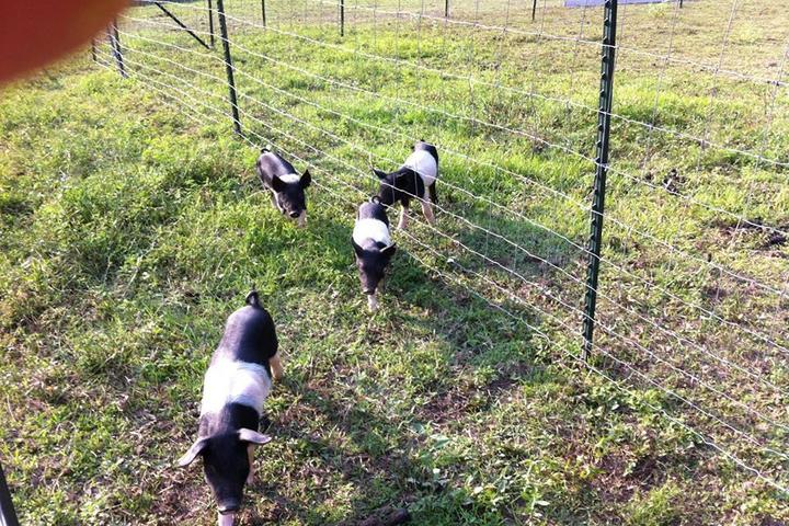 Pet Friendly Steele's Christmas Tree Farm