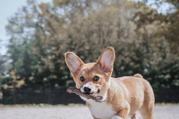Off Leash Dog Parks In Brooklyn Ny Bringfido