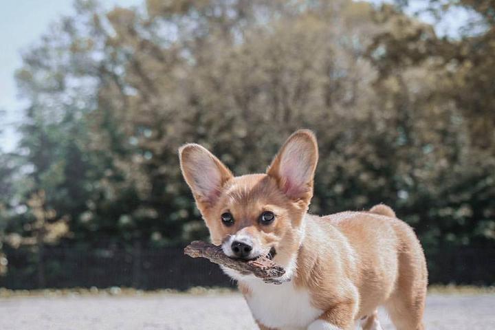 Pet Friendly Dyker Beach Park Dog Run