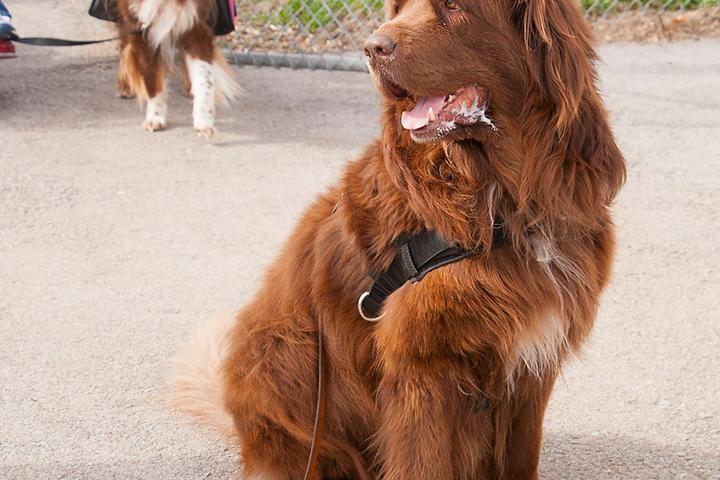 Pet Friendly Hanscom Park Dog Park