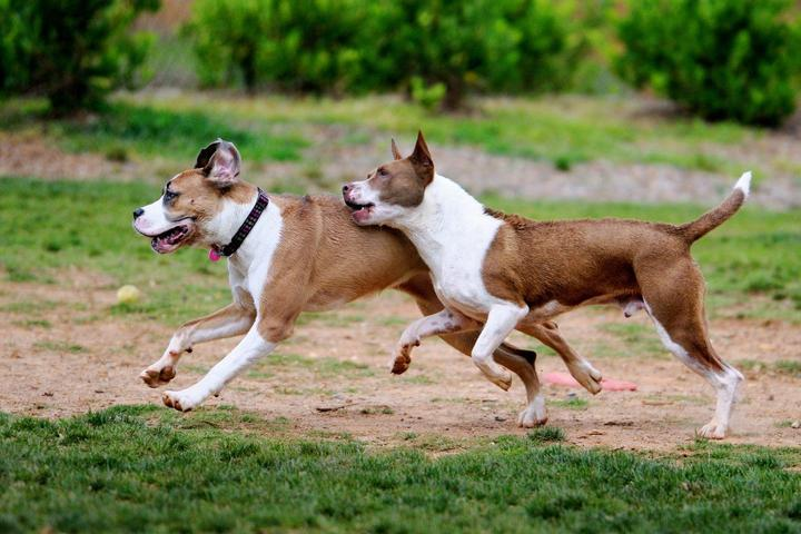 Pet Friendly Chattapoochee Dog Park