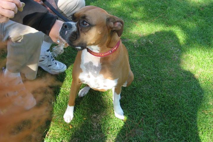 Pet Friendly Destin Dog Park