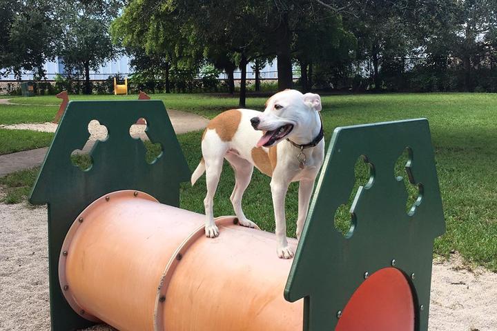 Pet Friendly Oakland Bark Park