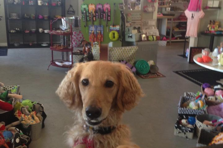 Pet Friendly Paws and the Palette Dog Bakery