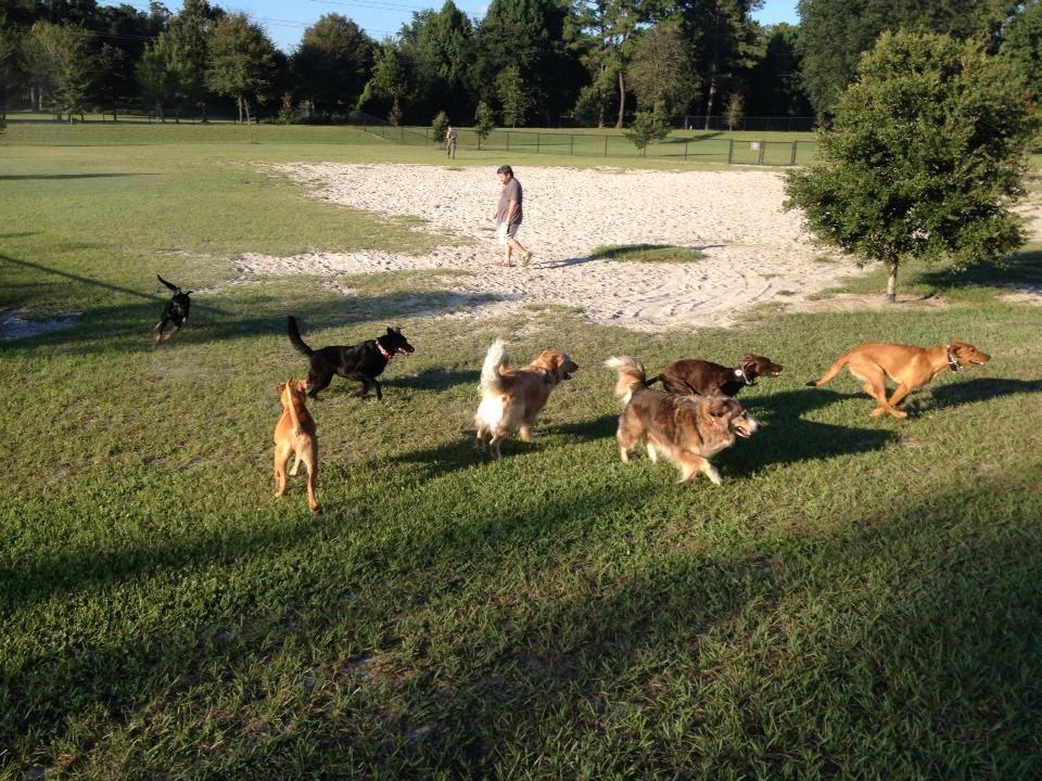 Dog Boarding Kennels Gainesville Fl