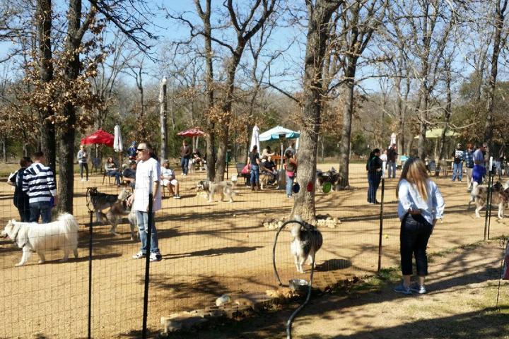 Pet Friendly Doghouse Drinkery Dog Park