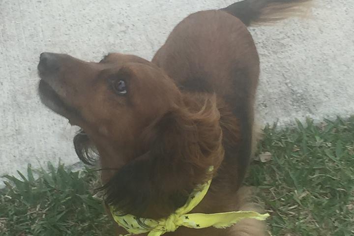 Pet Friendly Canine Corner Dog Park
