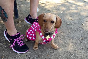 Off Leash Dog Parks In Ventura Ca Bringfido