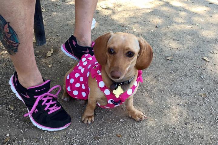Pet Friendly Mitchell Edelson Dog Park at Soule Park