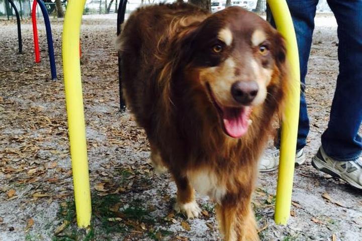 Pet Friendly Unleashed in Orange Beach Dog Park