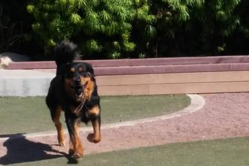 Pet Friendly K-9 Corner Dog Park